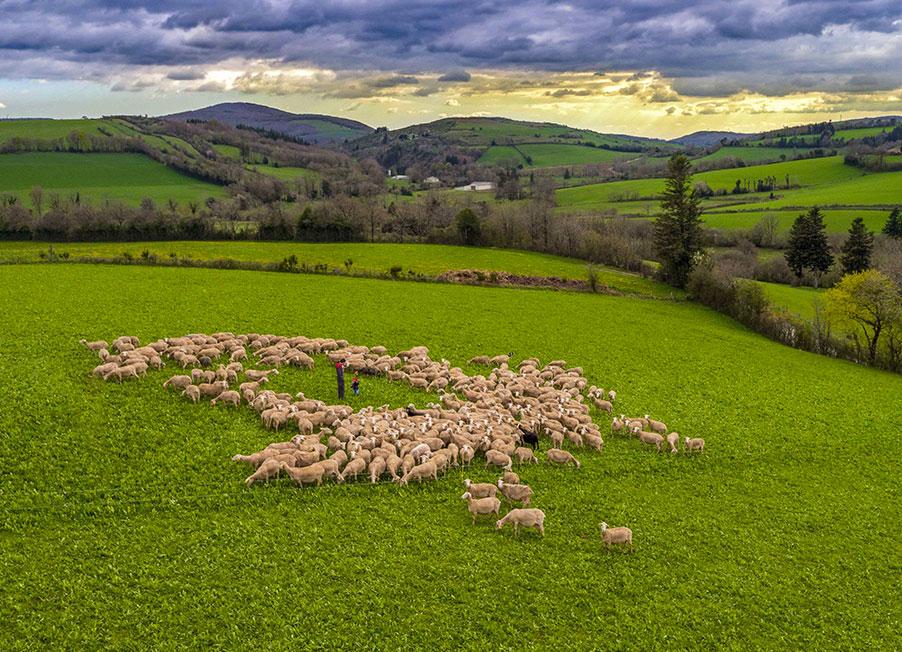 paturage occitanie aveyron