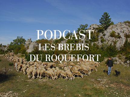 podcast brebis larzac